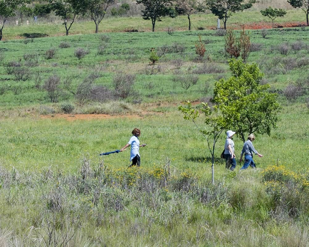 dullstroom activities - walking in walkersons estate