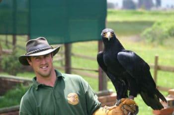 Bird of Prey Centre