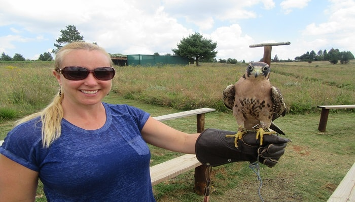 Birds of Prey Centre Dullstroom