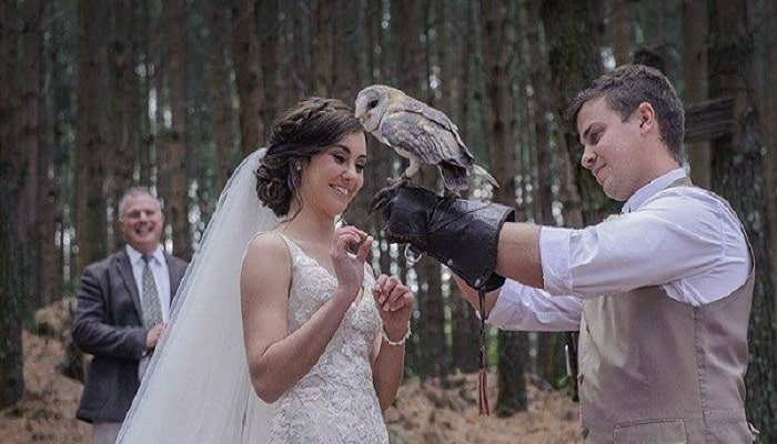 owl ring bearer