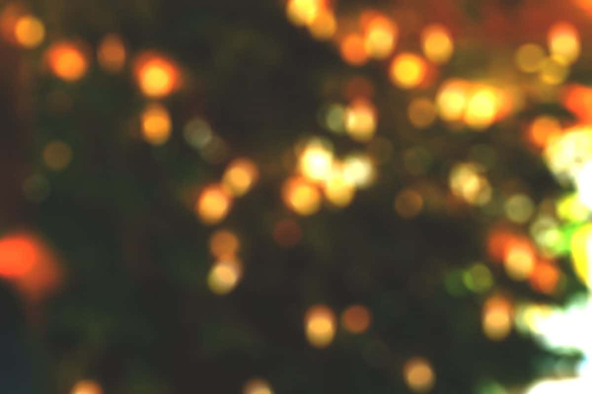 Festive Season Dullstroom
