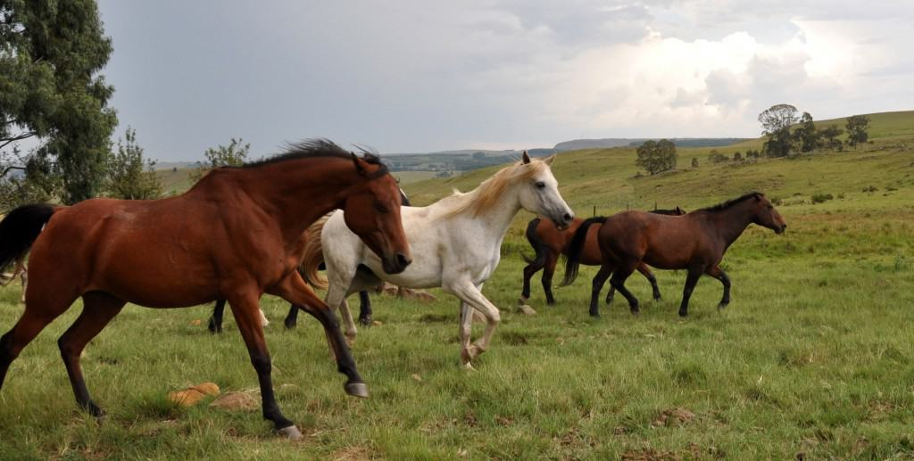 Horses at Walkersons in Dullstroom