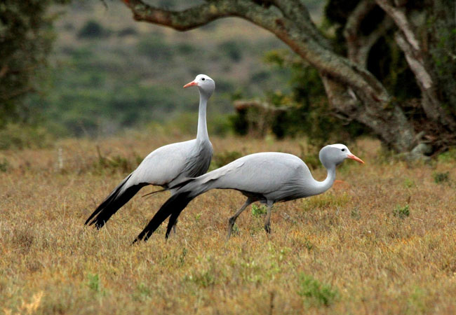 Verloren Vallei Nature Reserve