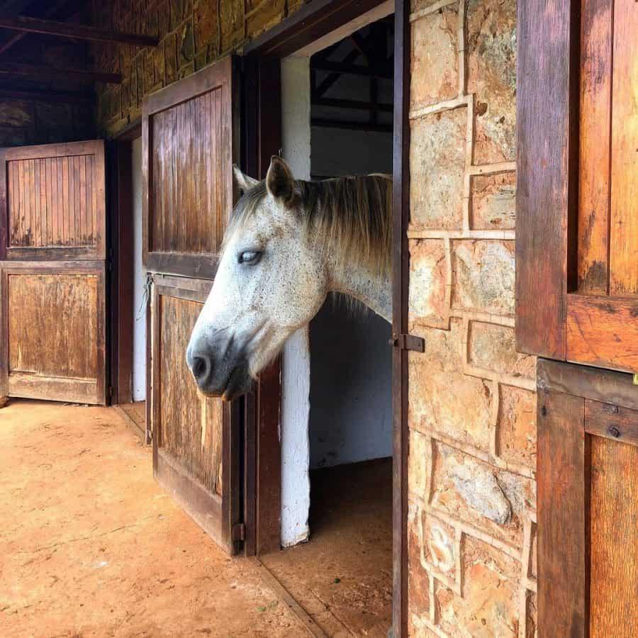 Dullstroom horse riding