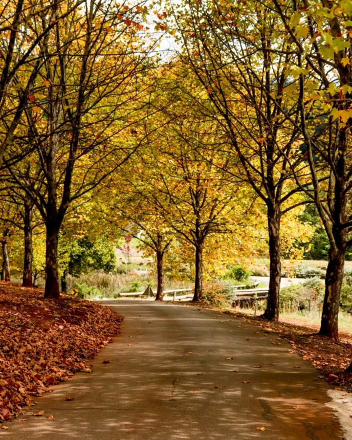 dullstroom in autumn